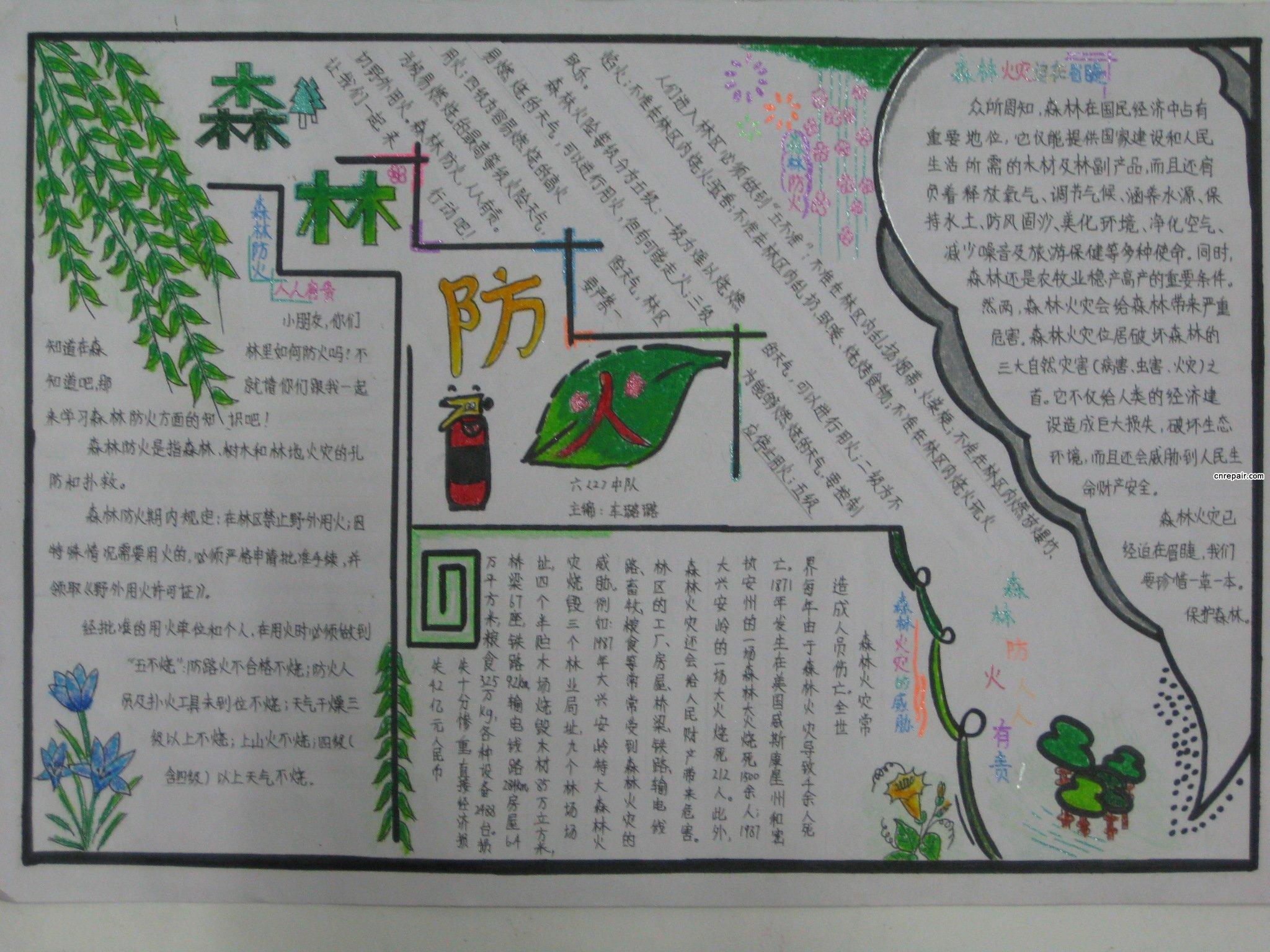 求图片:森林手抄报图片