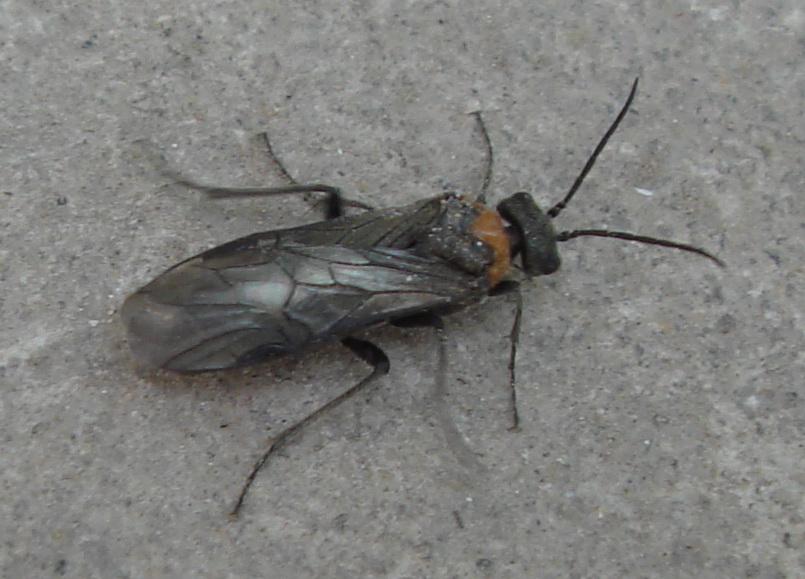 孕妇梦见虫子钻进皮肤