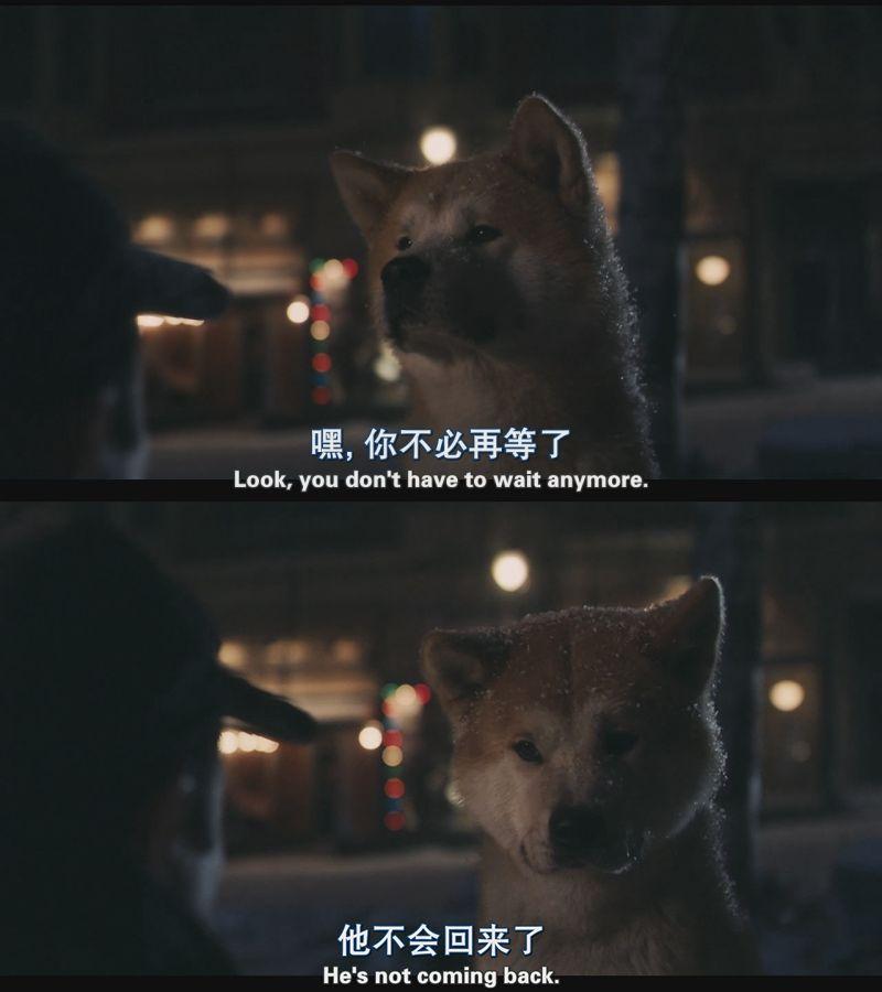 Dog At Dog Movie
