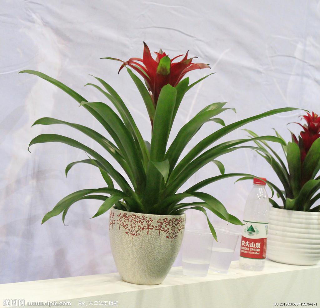 花卉图片|绿植图片|花卉|植物图片图片