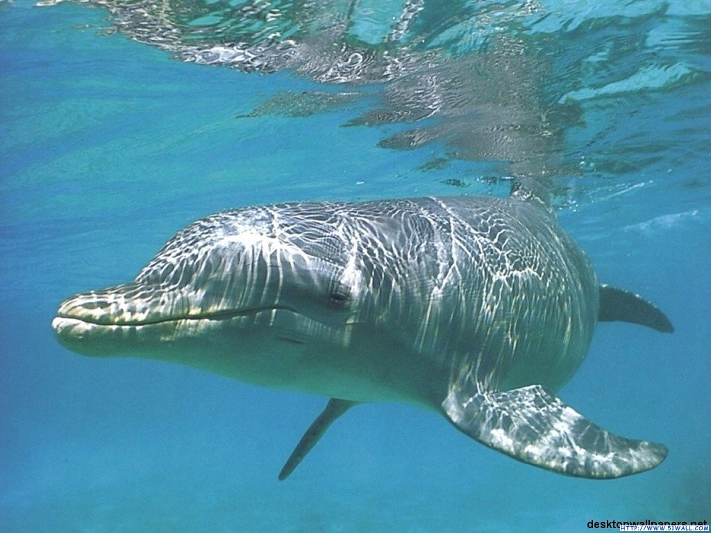 齿鲸的种类有几种