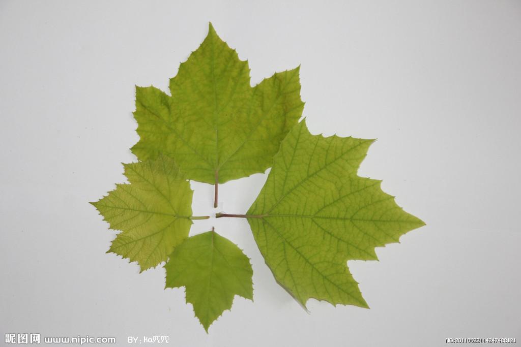 叶子是绿色的非常柔软,像吊兰一样往下长,是什么植物