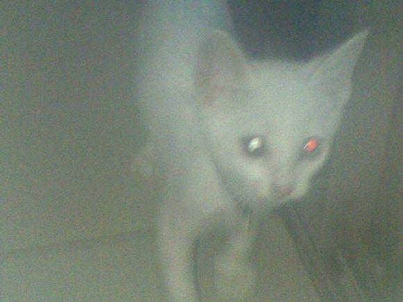 猫咪是不是能看见鬼