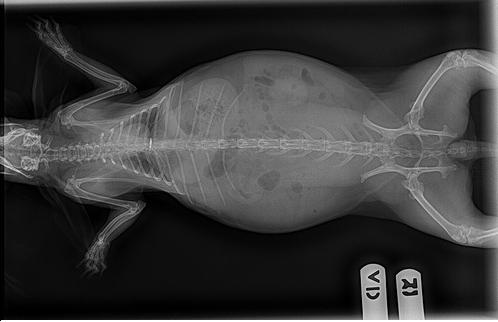 兔子的身体结构