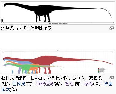 恐龙到底长什么样的呀