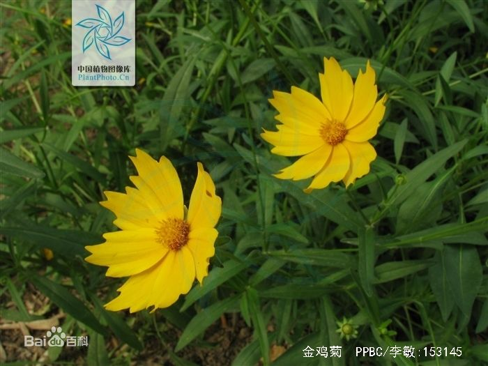 请问这图片上花的名称 品种及详细资料