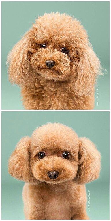 小型狗狗哪种最可爱