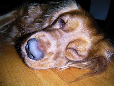 狗翻白眼表情包