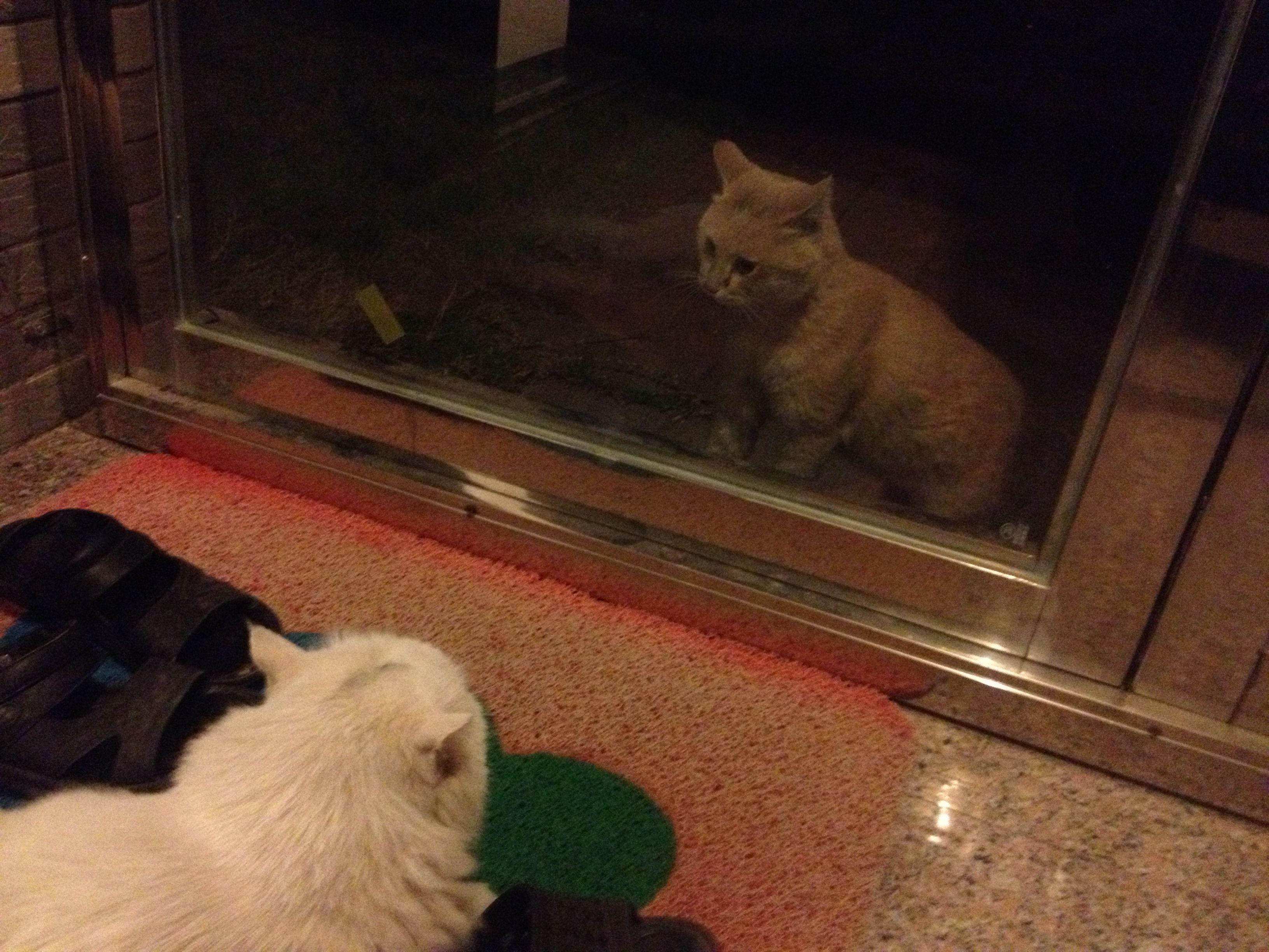 武汉流浪猫领养