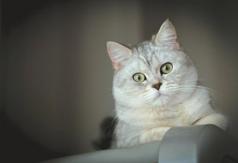 全是猫的其他图片