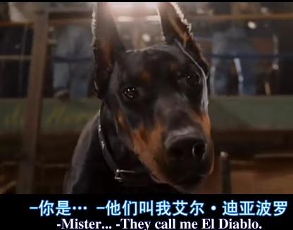 比佛利拜金狗 里面的狗狗品种