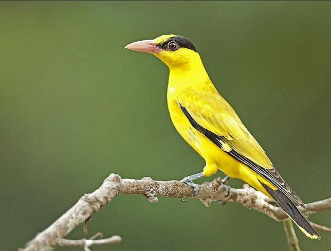 这是什么鸟?