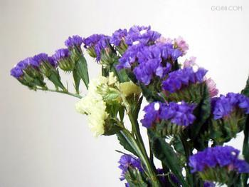 情意义的花 要图片,名称及其花语 一定要有花-勿忘我的花语和图