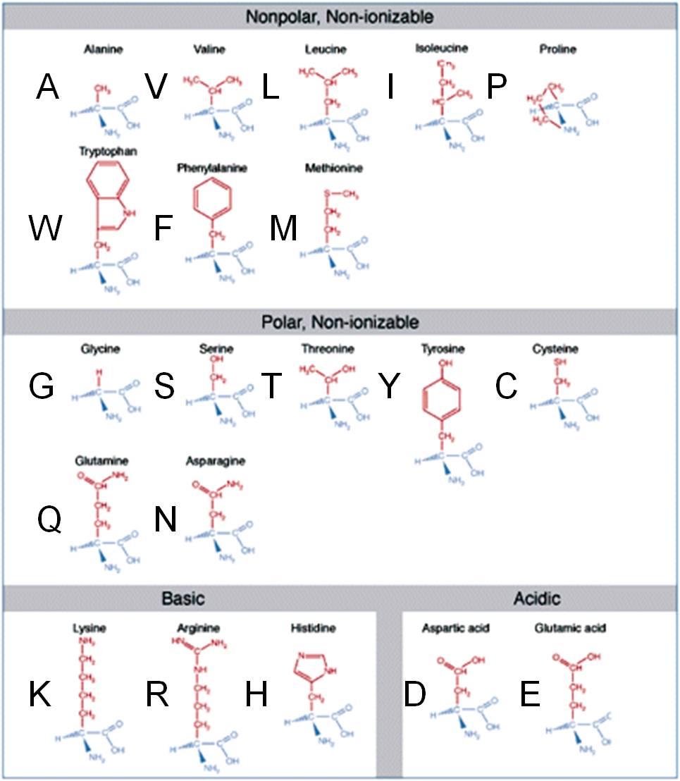 生物体内氨基酸的20种r基团的分子式分别是什么?图片