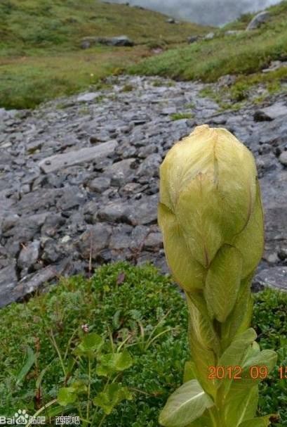 这是什么植物?还是说它得了病虫害?_百度知道
