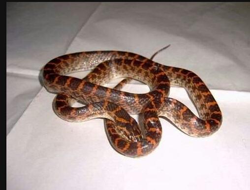 天津买的,水蛇,说是没有毒,但是我还是不太懂谁能详细