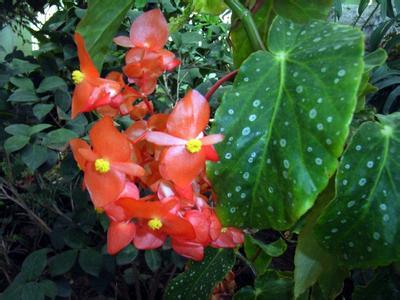 植物叶子有白斑