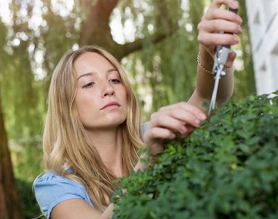 植物对雾霾的作用