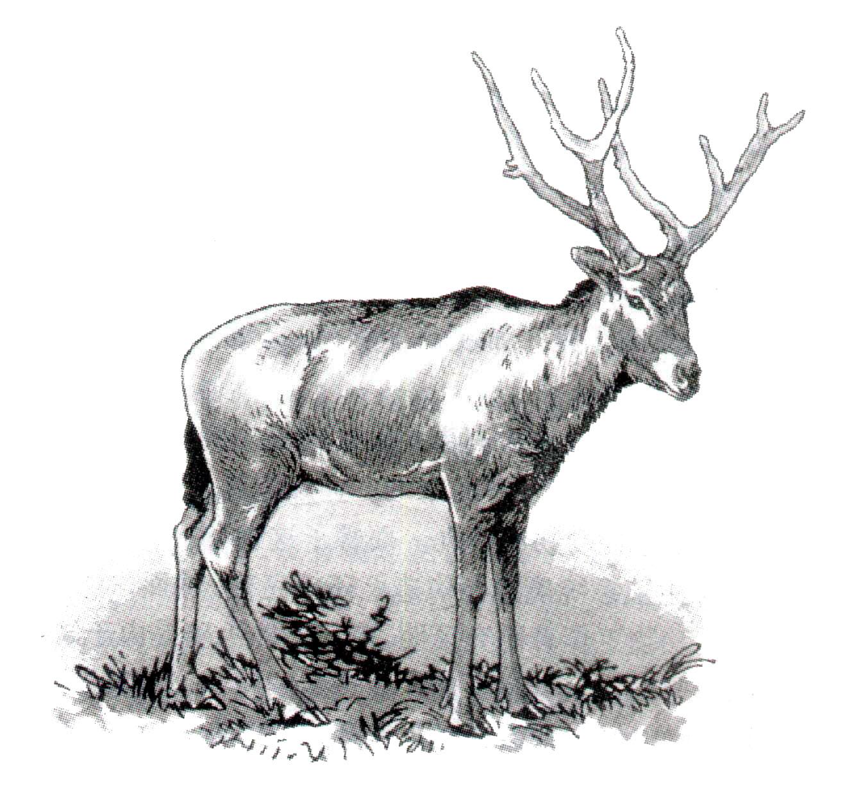 可爱|素描动物图片|素描动物图片简单一点|儿童彩泥简单动物图片