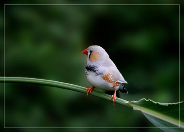 这是什么鸟?还不会自己吃东西的小鸟要怎么养?