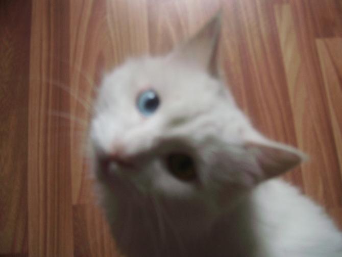 新买的猫怎么养