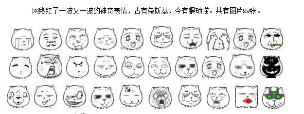 这个是猥琐猫qq表情系列的图片