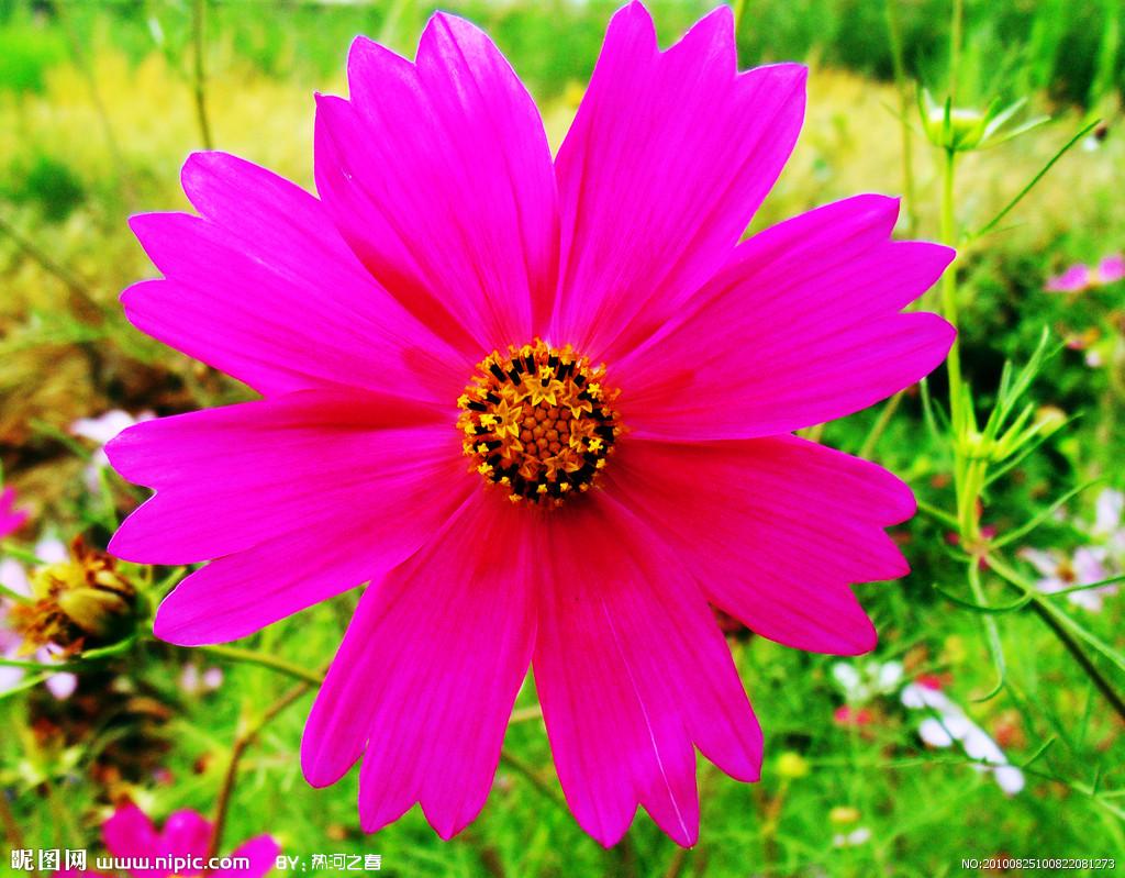 花的种类名称,有图片更好(1024x799)-花的分类 花朵分类 花的分类