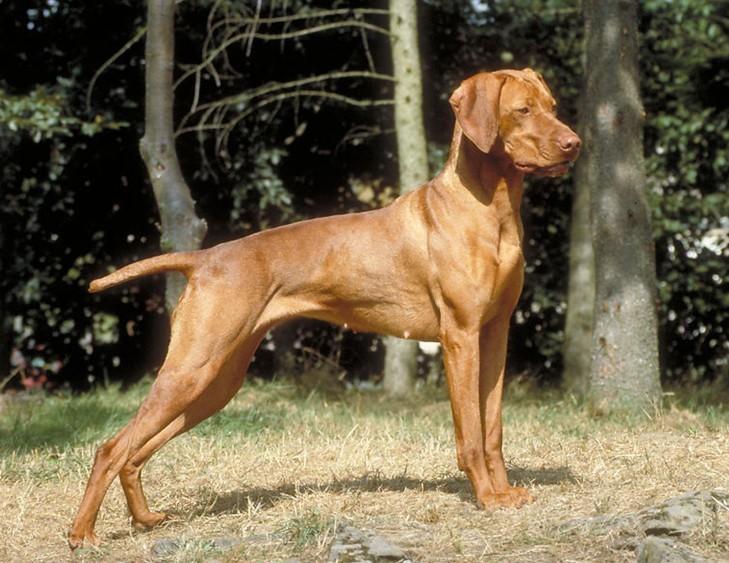 请问我这是什么狗狗啊?买的时候卖家说是二个月金毛犬