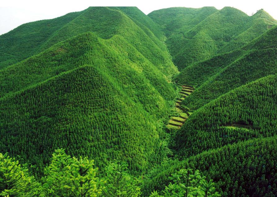 林业是我国经济建设和环境建设的重要组成部分,具有与其他行业不同的图片