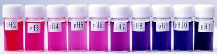 能够使紫甘蓝水变绿的物质称为