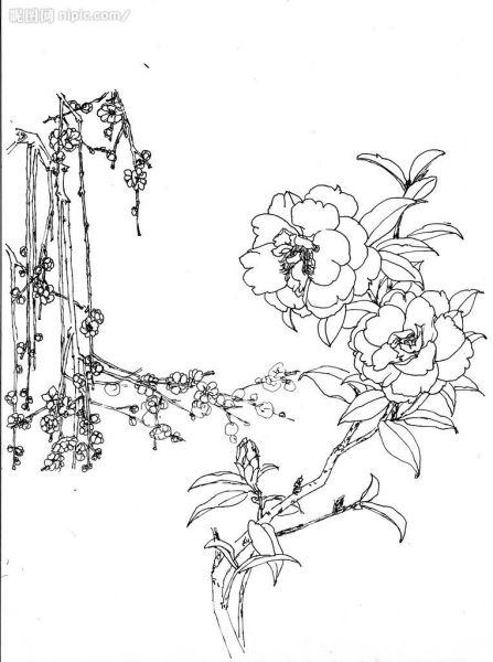 一些花素描的图片 38 2007-03-18 花卉简笔画图案,要花在手抄报上的
