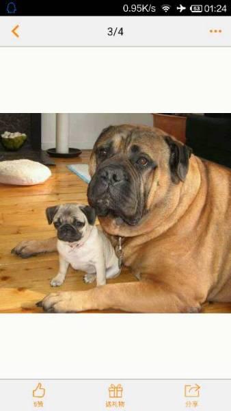 狗的种类傹.���/_求狗品种