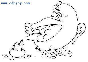 儿童黑白线描《小鸡找妈妈》范画图片
