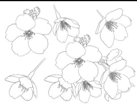谁会画简易樱花图案,能给发一张图片吗?我要用来设计会徽图片