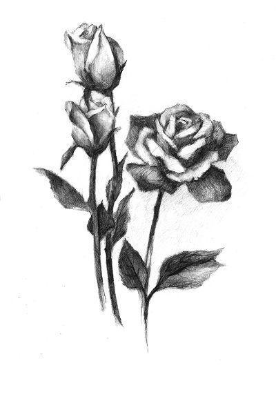 玫瑰花素描图片图片