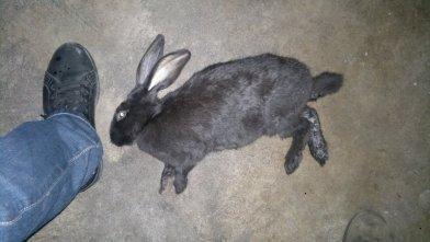 还是昨天好好的今天突然死了玄凤鹦鹉养一只兔子两只图片
