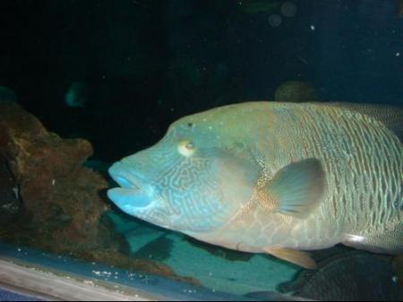 鱼的种类图片 鱼的图片 鱼的种类图片和名字