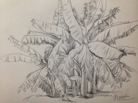 求大神给张树木的铅笔画手绘-手绘铅笔画 搞笑图片 封面设计手绘铅笔