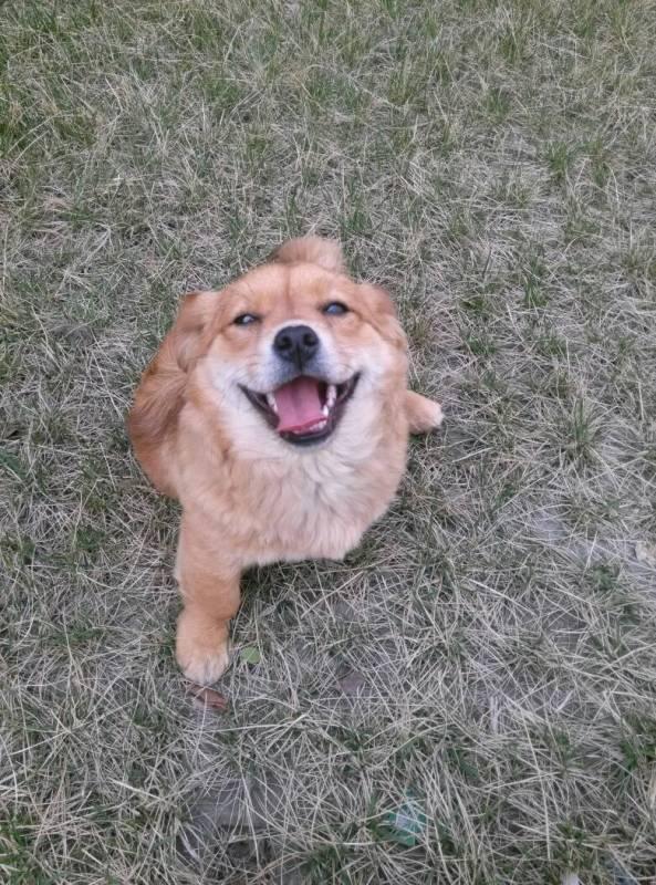 是什么狗狗 求品种名字