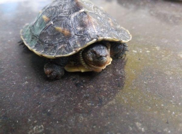 求救,我的小乌龟怎么了