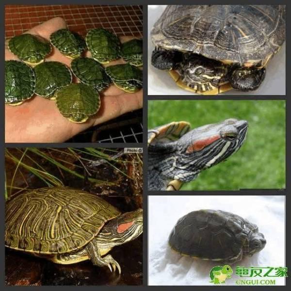 乌龟可以在室外冬眠吗 用建筑工地的沙铺给它可以吗