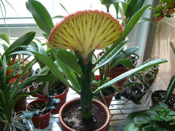 这植物属仙人掌科植物吗图片