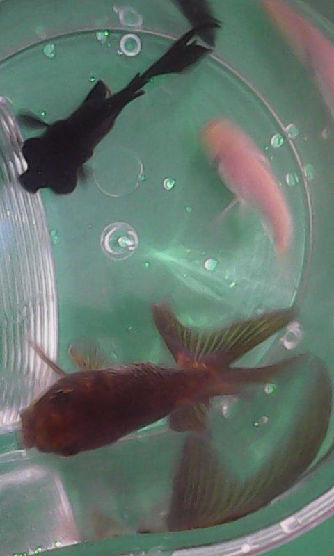 怎么分辨鱼是公是母图片