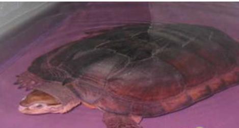 乌龟冬眠怎么样不易生病