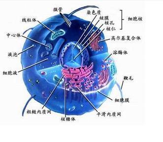 什么生物没有细胞结构