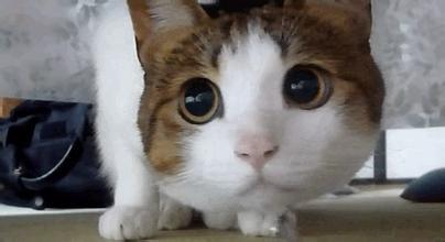 这只猫的表情包叫啥?图片
