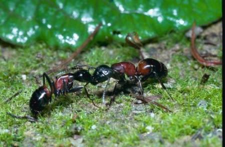 蚂蚁bt种子下载
