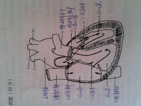 心脏填图题1,2,10这三个空应该填什么?图片